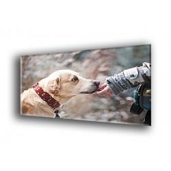 50804-Perro acariciado