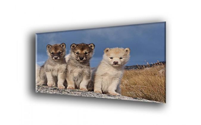 50806-Perros bonitos