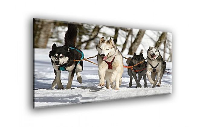 50808-Huskies
