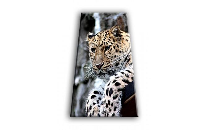 50901-Leopardo