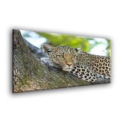 50902-Leopardo