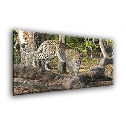 50903-Leopardo