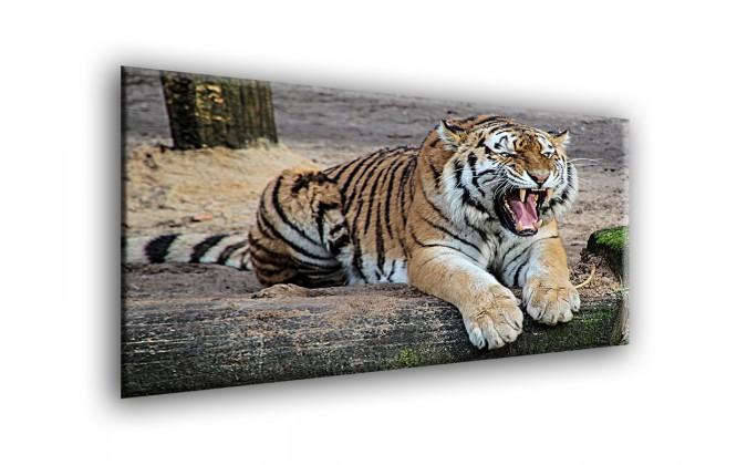 50905-Tigre furioso