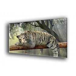 50906-Tigre descansando