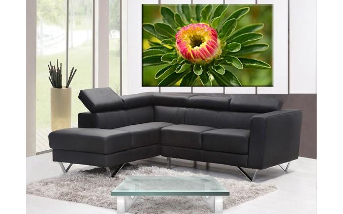 3009-Dalhia en flor