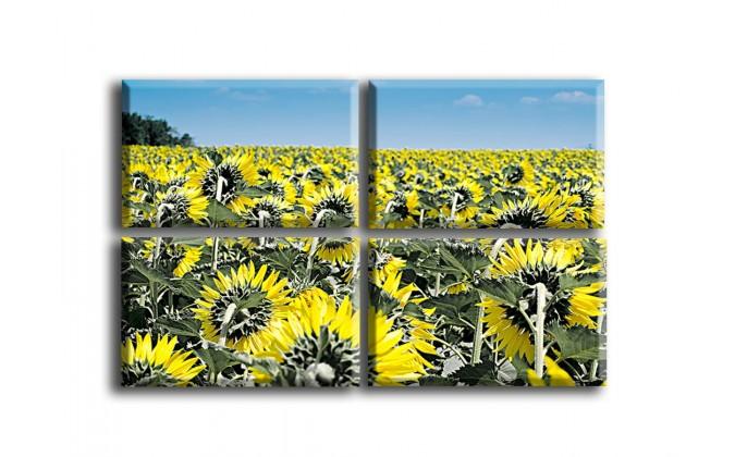 4007-Girasoles amarillos