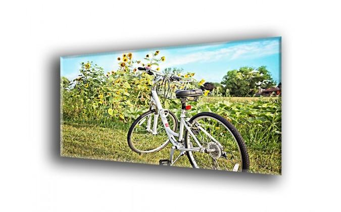 4008-Girasol y bicicleta