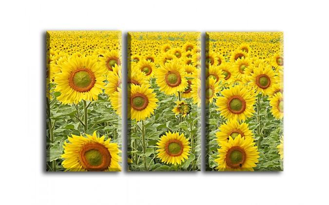 4015-Girasol flor amarillo