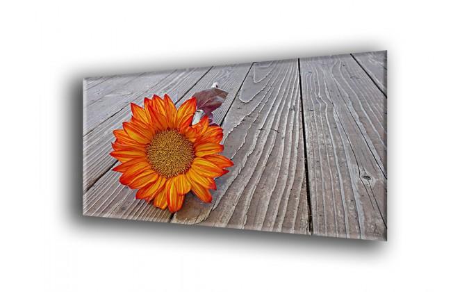 4016-Girasol de otoño
