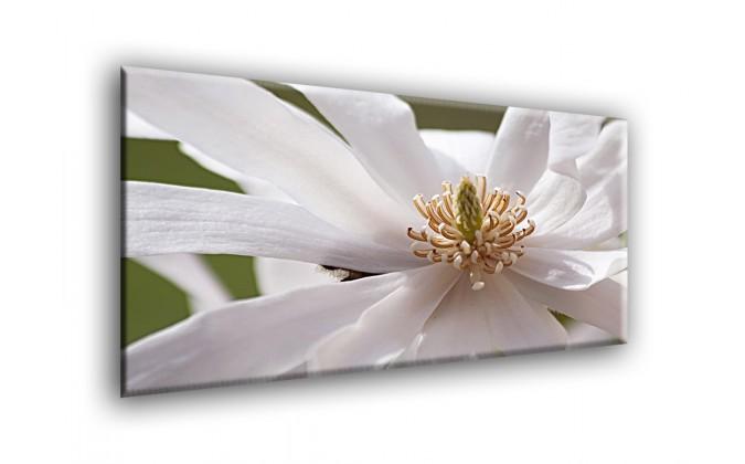 5504-Magnolia blanca