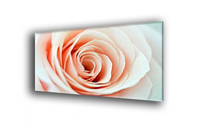 9018-Rosa Salmón pétalos