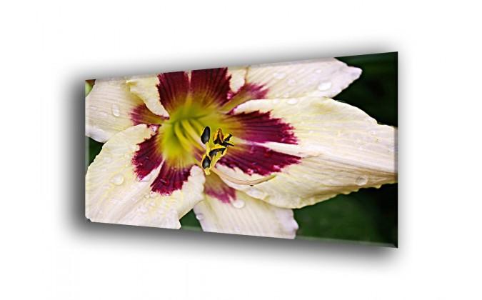 5006-Lirio floración