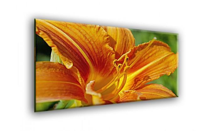 5007-Lirio planta naranja