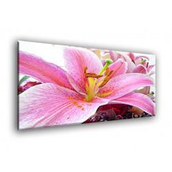 5010-Planta lirio rosa
