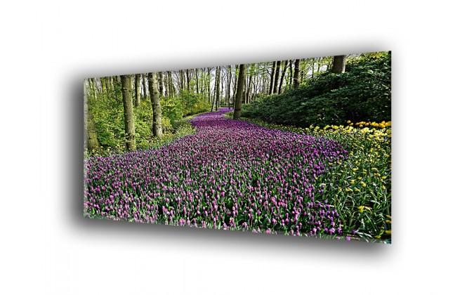 5011-Lirios plantación en flor