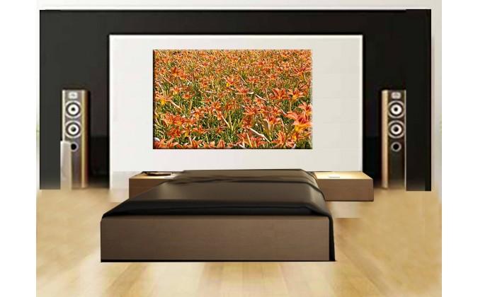 5017-Campo flor de lirio