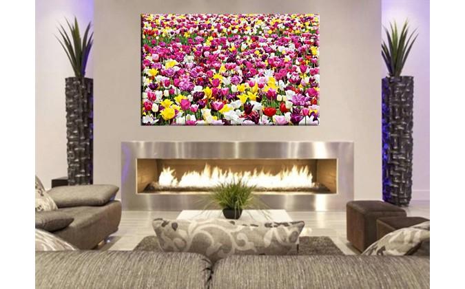 9501-Campo de tulipanes bonitos