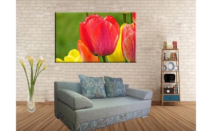9502-Tulipanes flores de primavera