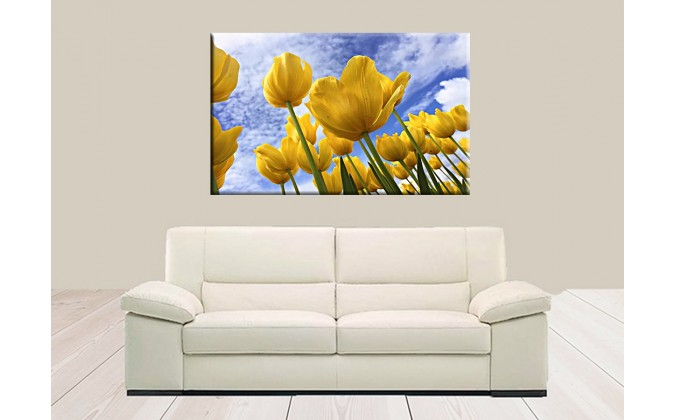 9506-Flor tulipán fondo cielo