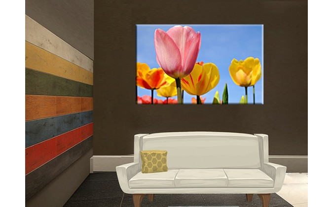 9507-Colorido de tulipánes