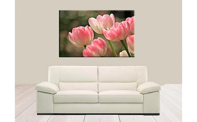 9513-Planta tulipanes de primavera