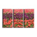 9514-Flor tulipán rojo púrpura amarillo