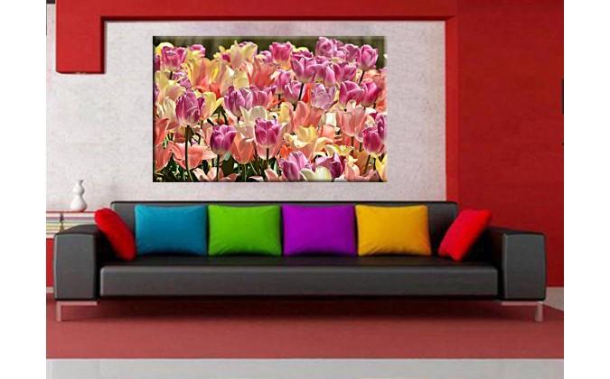 9523-Tulipanes flor primavera