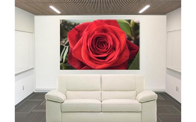 9022-Rosa Flor de verano