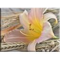 5024-flor lirio decoracion mesa