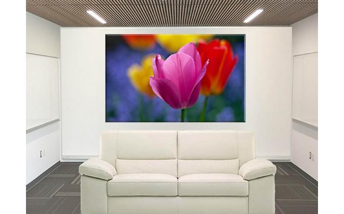 9525-Tulipan Floreciente Flor