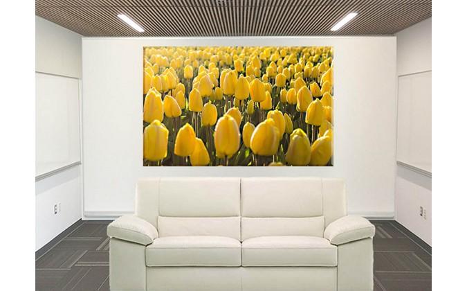 9526-Tulipanes primavera