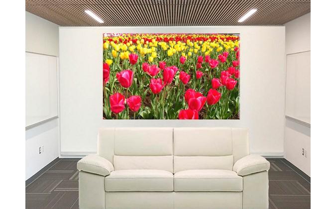 9527-Tulipanes rojos
