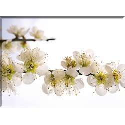 9602-Flor cerezo difuminada