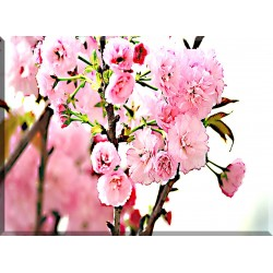 9603- Flores De Cerezo