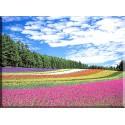 Prado arco iris japones-2042