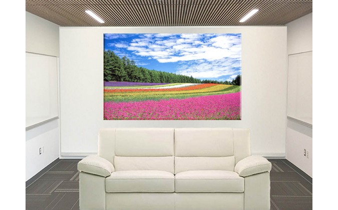 20042-Prado arco iris japones