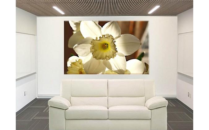 20043- La Flor De Pascua Amarillo Blanco