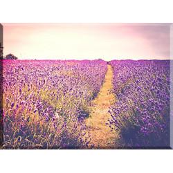 20044-Prado violeta