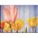 95077-Tulipán Flor Rosa