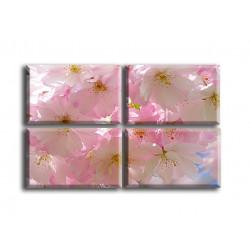 Flor de cerezo-2018