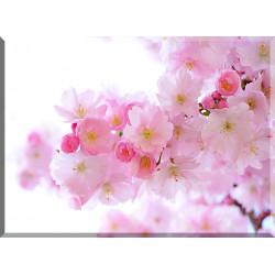 9608-Cerezos Japoneses Flores Primavera