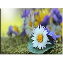 6015-Flores Silvestres Margarita Violeta Blanco Amarillo