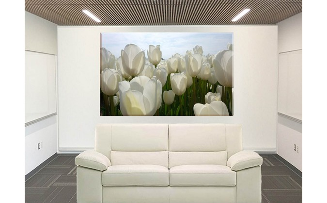 9534-Tulipanes en blanco