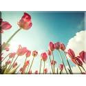 9536-Tulipanes hacia el cielo