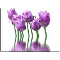 9539-Tulipanes decoracion violeta