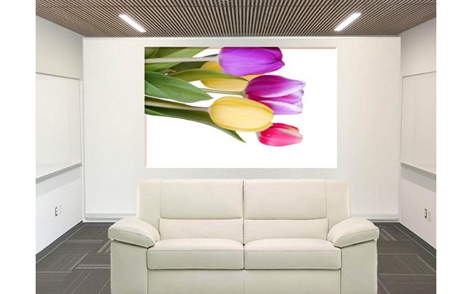 9540-Tulipanes variados colores