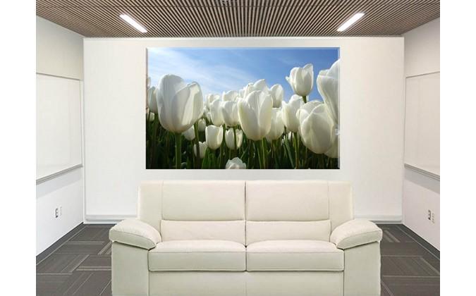 9541-Tulipanes blancos