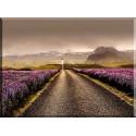 22521-Islandia Flores Paisaje Por Carretera Sunrise