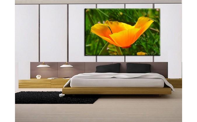 Amapola naranja-1003