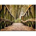 20539-Hojas Paisaje Puente madera